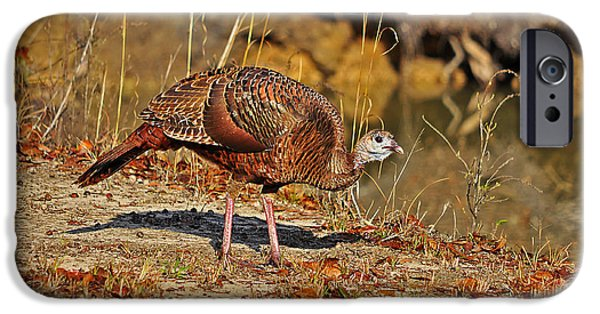 Meleagris Gallopavo iPhone Cases - Wild Turkey iPhone Case by Al Powell Photography USA