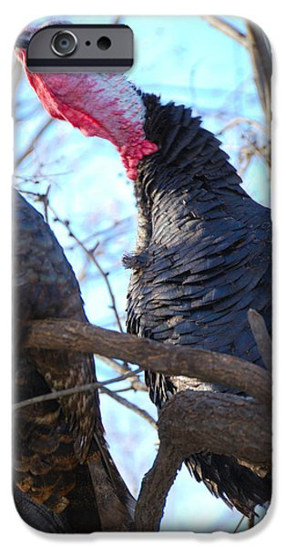 Eastern Wild Turkey iPhone Cases - Wild Turkey Gobbling iPhone Case by Thea Wolff