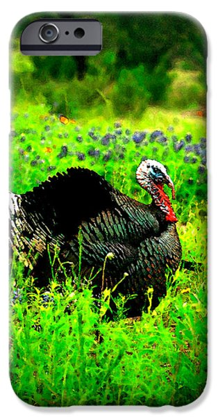Eastern Wild Turkey iPhone Cases - Wild Turkey Water Color iPhone Case by Randy Stephens
