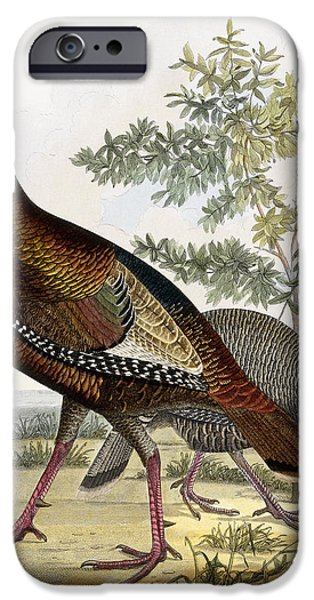 Color Drawings iPhone Cases - Wild Turkey iPhone Case by Titian Ramsey Peale