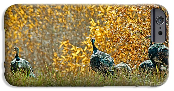 Meleagris Gallopavo iPhone Cases - Wild Turkeys and Fall Colors iPhone Case by Robert Bales