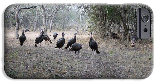 Eastern Wild Turkey iPhone Cases - Wild Turkeys II iPhone Case by Jeff Tuten