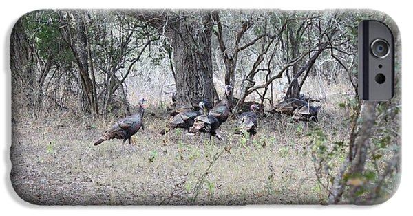 Eastern Wild Turkey iPhone Cases - Wild Turkeys iPhone Case by Jeff Tuten