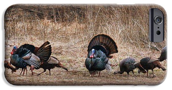 Wild Turkey iPhone Cases - Wild Turkeys iPhone Case by Lori Deiter