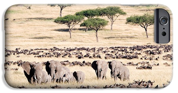 Fauna iPhone Cases - Wildebeests With African Elephants iPhone Case by Panoramic Images