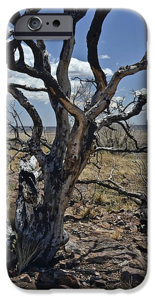 High Park Wildfire iPhone Cases - Wildfire Scarred Mesquite Tree Skeleton iPhone Case by Allen Sheffield