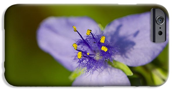 Gardening Photography iPhone Cases - Wildflower 1 - Botanical Photography by Sharon Cummings iPhone Case by Sharon Cummings