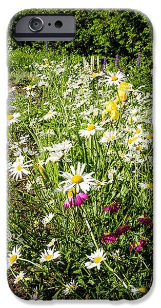 Wildflower garden and path to gazebo iPhone Case by Elena Elisseeva