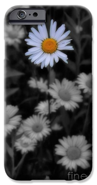 Disc iPhone Cases - Wildflower - Ox Eye Daisy iPhone Case by Henry Kowalski