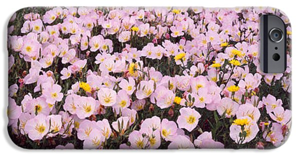 Primroses iPhone Cases - Wildflowers Galveston Tx Usa iPhone Case by Panoramic Images