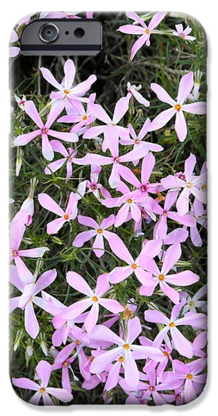 Phlox iPhone Cases - Wildflowers - Long-leaf Phlox iPhone Case by Carol Groenen