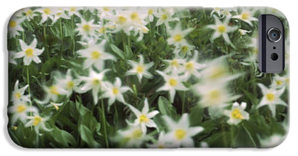 Rainy Day iPhone Cases - Wildflowers On Mountains, Mt Rainier iPhone Case by Panoramic Images