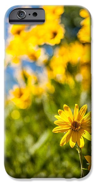 Pasture iPhone Cases - Wildflowers Standing Out Abstract iPhone Case by Chad Dutson