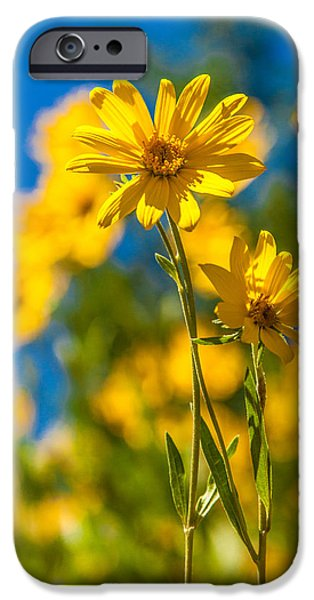 Pasture iPhone Cases - Wildflowers Standing Out iPhone Case by Chad Dutson