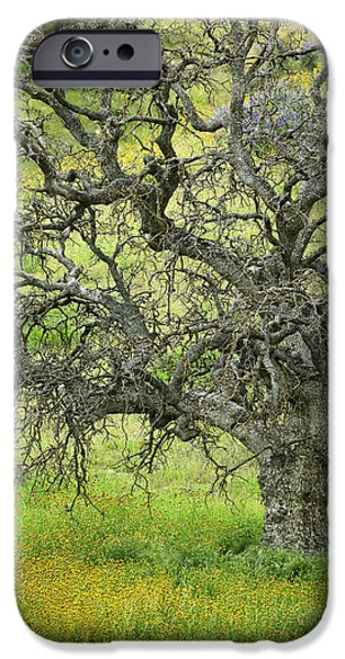 Interior Scene iPhone Cases - Wildflowers Under Oak Tree - Spring in Central California iPhone Case by Ram Vasudev