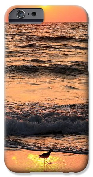 Willet In The Spotlight iPhone Case by Adam Jewell