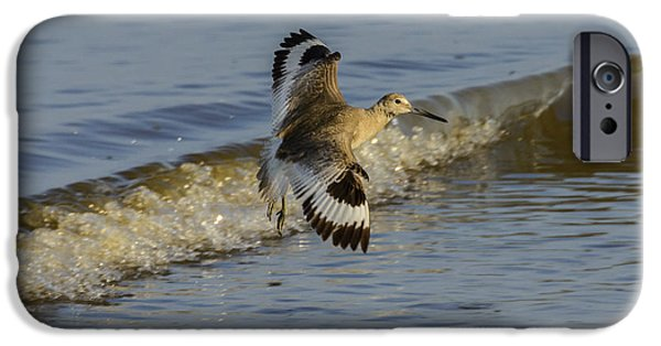 Sea Birds iPhone Cases - Willet lands in Surf on Jekyll Island 2 iPhone Case by Steve Samples
