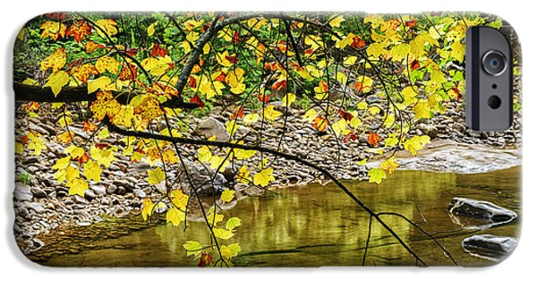 Trout Stream Landscape iPhone Cases - Williams River Tulip Poplar iPhone Case by Thomas R Fletcher