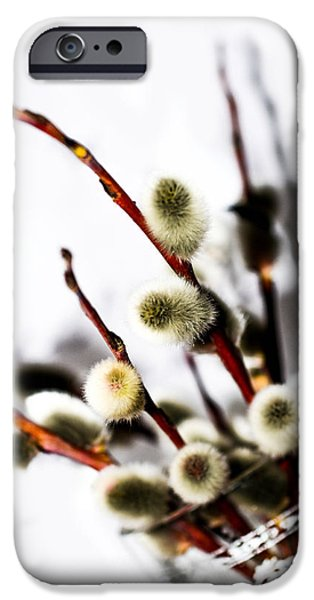 Flower Of Life iPhone Cases - willow in color in a Glass iPhone Case by Toppart Sweden