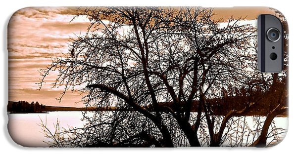 Willow Lake iPhone Cases - Willow on Silver Lake 2 iPhone Case by Elizabeth Tillar