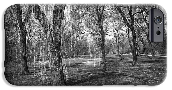 Willow iPhone Cases - Willows in spring park iPhone Case by Elena Elisseeva