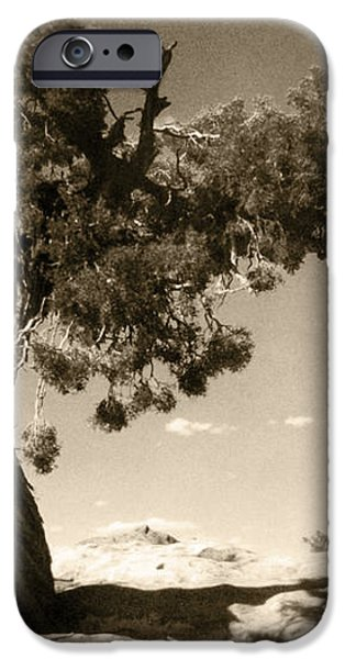 Wind Swept Tree iPhone Case by Scott Norris