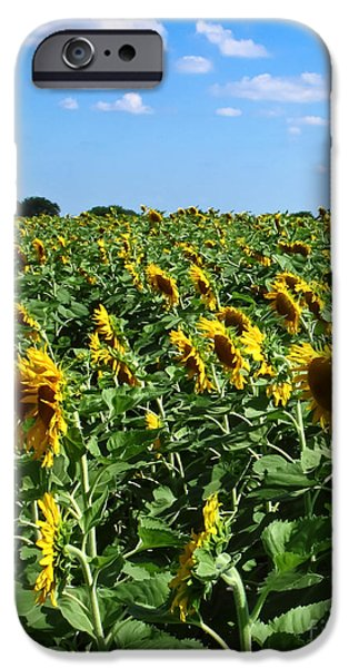 Nebraska iPhone Cases - Windblown Sunflowers iPhone Case by Robert Frederick