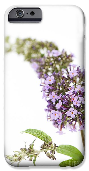 July iPhone Cases - Windfall iPhone Case by Anne Gilbert