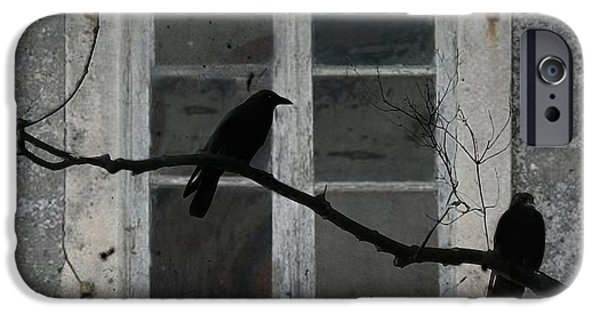 Crows iPhone Cases - Window Dressing iPhone Case by Gothicolors Donna Snyder