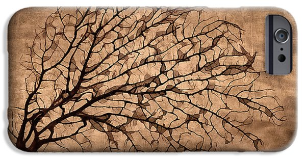 Fallen Leaf iPhone Cases - Windowpane Coral iPhone Case by Carol Leigh