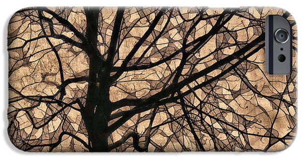 Fallen Leaf iPhone Cases - Windowpane Tree in Autumn iPhone Case by Carol Leigh
