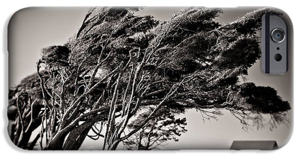 Lanscape iPhone Cases - Windswept iPhone Case by Dave Bowman