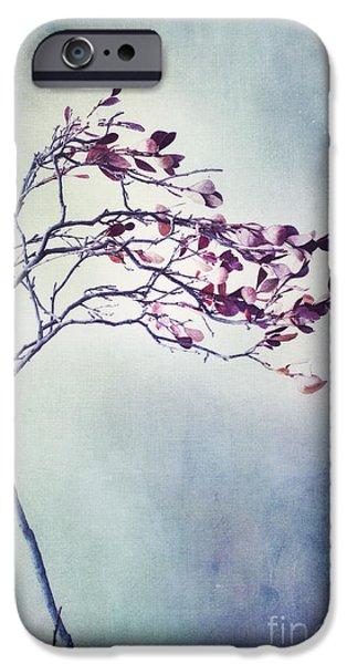 Blueberries iPhone Cases - Windswept iPhone Case by Priska Wettstein