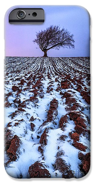 Snow iPhone Cases - Windswept Tree Scotland iPhone Case by John Farnan