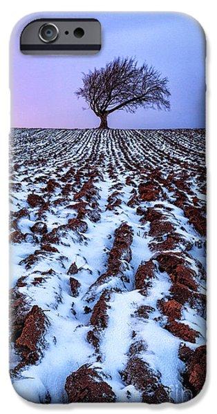 windswept tree scotland iPhone Case by John Farnan