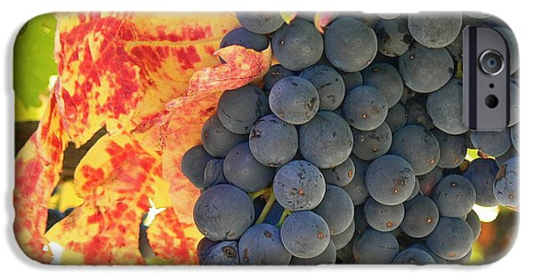 Cathar Country iPhone Cases - Wine Country iPhone Case by France  Art