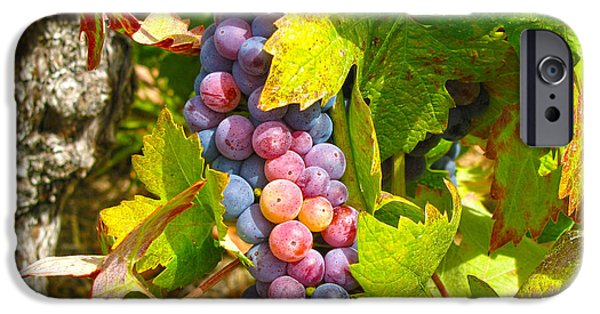 Grape Vine iPhone Cases - Wine Grapes II iPhone Case by Shari Warren