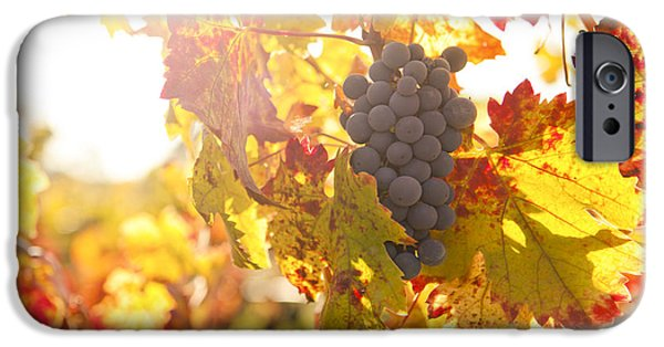 Grapevines iPhone Cases - Wine Grapes in the Sun iPhone Case by Diane Diederich