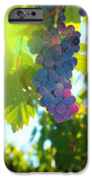 Wine grapes  iPhone Case by Jeff  Swan