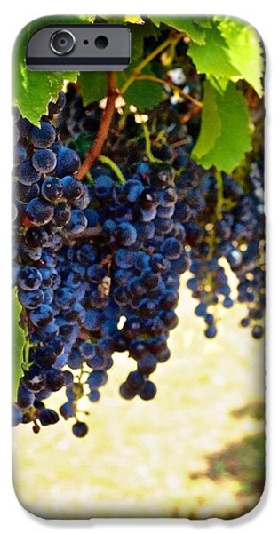 Metal Vineyard Print iPhone Cases - Wine Grapes iPhone Case by Kristina Deane