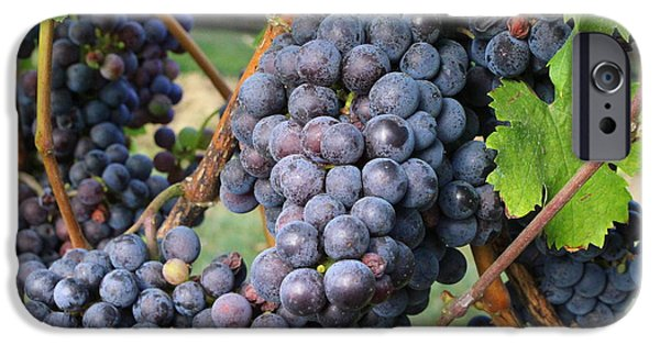 Agricultural iPhone Cases - Wine Grapes of New York iPhone Case by  Photographic Art and Design by Dora Sofia Caputo