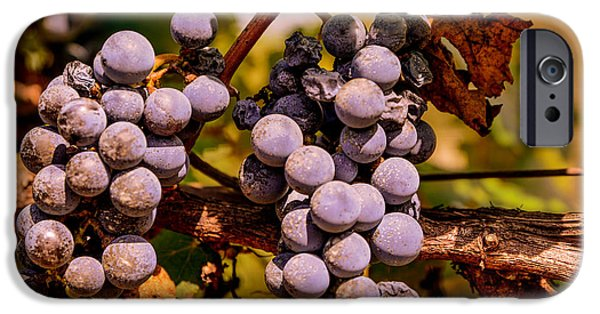 Fruit On The Vine Print iPhone Cases - Wine grapes on the vine iPhone Case by Zina Stromberg