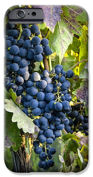 Wine Grapes iPhone Case by Tetyana Kokhanets