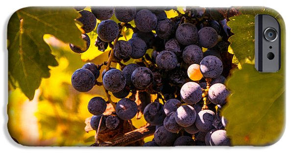 Fruit On The Vine Print iPhone Cases - Wine grapes iPhone Case by Zina Stromberg