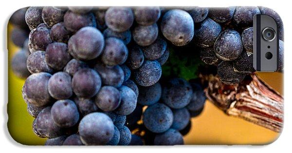 Blue Grapes Photographs iPhone Cases - Wine Harvest Merlot Grapes iPhone Case by Iris Richardson