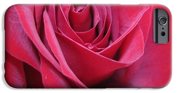 Flora Drawings iPhone Cases - Wine Rose 2 iPhone Case by Tara  Shalton