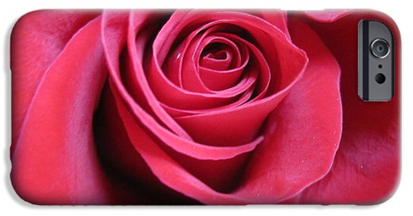 Flora Drawings iPhone Cases - Wine Rose 4 iPhone Case by Tara  Shalton