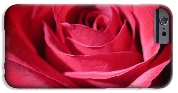 Flora Drawings iPhone Cases - Wine Rose1 iPhone Case by Tara  Shalton