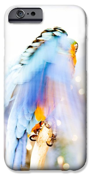 Daysray Photography iPhone Cases - Wing Dream iPhone Case by Fran Riley