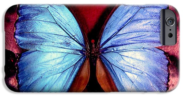 Blue Swallowtail iPhone Cases - WINGS of NATURE iPhone Case by Karen Wiles